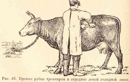 Как лечить теленка от вздутия живота