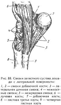 Запястный сустав животных лечебная физкультура при замене тазобедренного сустава