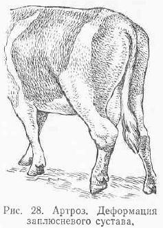 Ветеринария болезни суставов боли бедренном суставе